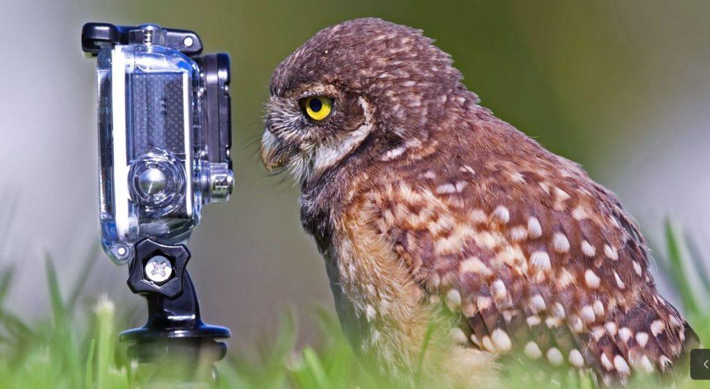 eule kamera 2